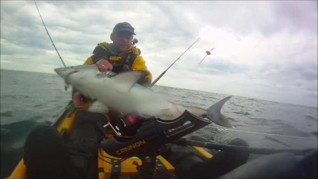 Porbeagle shark from Kayak by Graham Smith