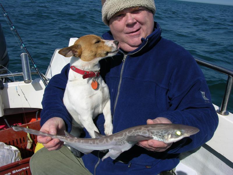 dogfish5.JPG