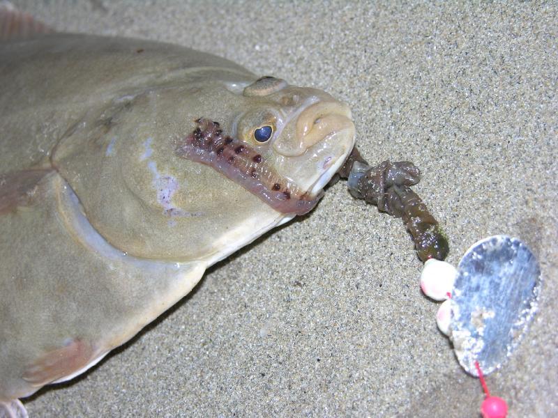 flounder8.JPG